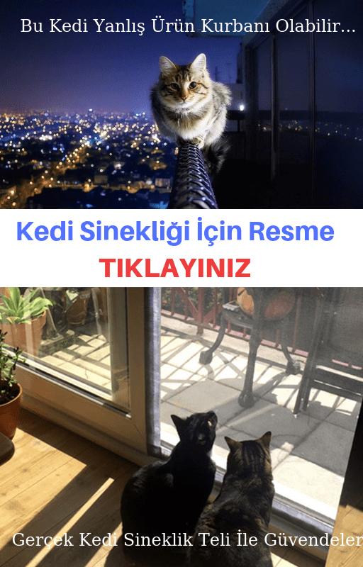 cam balkon kedi sinekliği